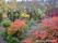 Trädgårdsväxter buskar