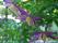 Klätter och klängväxter