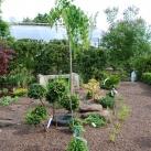 bild trädgårdsanläggning före