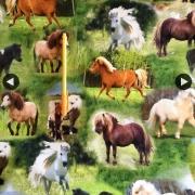 Hästar 54/56