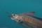 underwater-sailfish-003