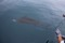 release-sailfish-002