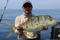 Golden Trevally 3