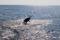 jumping sailfish 074