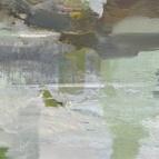 Fjard–duk_80x60