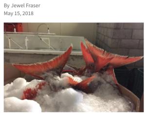 Photo courtesy of Future of Fish