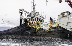 Credit: Photo: Norwegian Seafood Council / Grethe Hillersøy (2017)