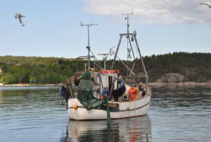 Trålning efter räka. Här används en trål med rist (galler). Trålen har en flyktöppning i taket genom vilken fisk och större skaldjur som inte kan passera ristgallret släpps ut. Foto: Mattias Sköld, SL