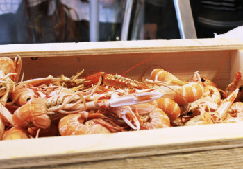Goda och certifierade. Det Goda och certifierade. Det är helt ok att äta havskräftor. Bild: Kari Holmwall