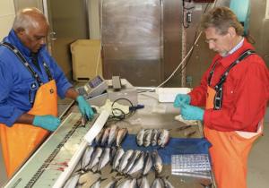 Text: Kjersti Sandvik, Bergen. Foto: Erling Kåre Stenevik, Havforskningsinstituttet