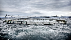 Fiskodlingar är något som kan leda till att haven exploateras ytterligare. Foto: Tomas Oneborg/SvD/TT