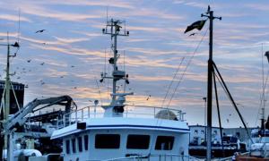Illa skött. Att i princip all fisk som fiskas ute i Västerhavet bereds i Danmark är ju inte bara ett problem för livsmedelsförsörjningen – det omöjliggör för svensk fiskenäring att utveckla hela produ