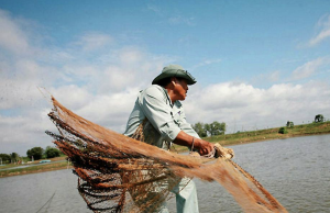 A Vietnamese fish farmer. Photo: WWF