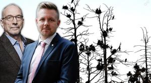 FOTO: TT Öar där skarven bosätter sig dör och träd, vegetation och omkringliggande vatten förstörs, skriver EU-parlamentarikerna Fredrick Federley och Nils Torvalds.