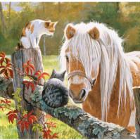 Bild 3D Häst & Katter
