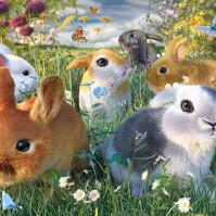 Bild 3D Kaniner
