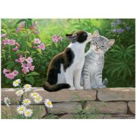 Bild 3D - Kattungar på mur