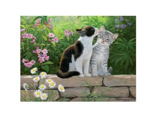 Bild 3D - Kattungar på mur -
