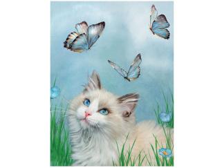 Kort 3D - Katt Blå Fjärilar -