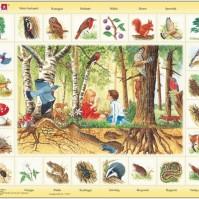 Pussel: Natur Skogen