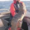 Havskatt 5kg