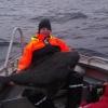 Hälleflundra 145cm 40kg+ Söröya