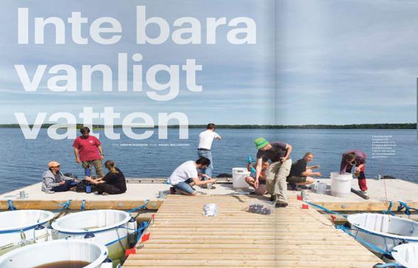 Bild från reportaget, ett montage från foto av Mikael Wallerstedt.