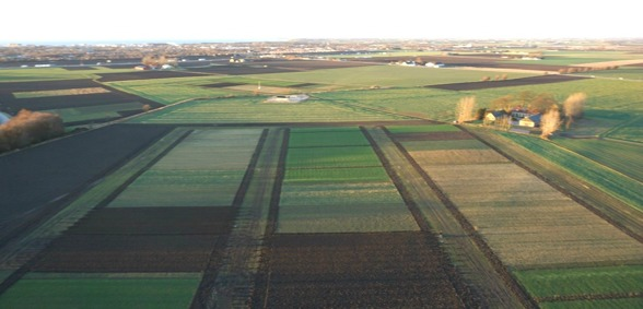 Experimental plots in Lönnstorp. Image taken from the Sony camera on-board of the UAV.