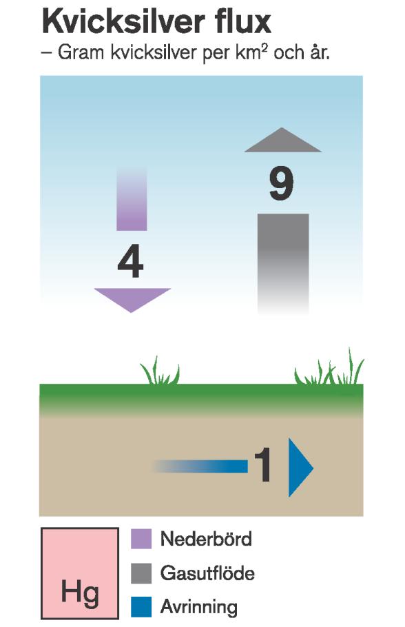 Kvicksilverflöden till och från myren i gram per kvadratkilometer och år. Illustration: Michael Kvick