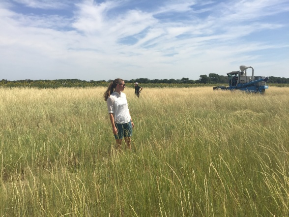 Linda-Maria at a Kernza field. The Land Institute i Kansas US