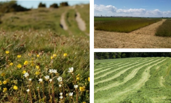 Collage with various grasslands represented within the BIOINVENT project.