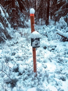 "One of the wildlife cameras in the camera trap system covered by snow and in need of some ""cleaning"". Photo: Gunnar Jansson."
