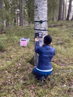 Installing a camera and audio recorder as part of the Lifeplan plot at Grimsö. Photo: Gunnar Jansson.