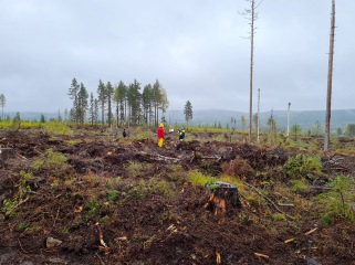 Carbon dynamics and wetland restoration is among the topics focused on at Trollberget experimental area, part of Svartberget Research Station. Photo: Blaize Denfeld.