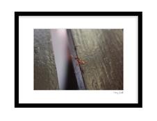 Ants way