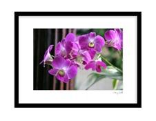 Lovely Lila Orchide