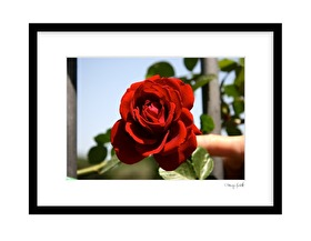 2016.06.09 - Röd ros