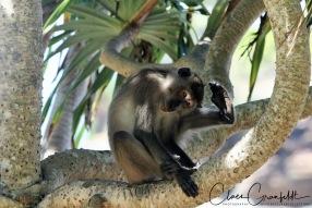Monkey at Koh Lanta