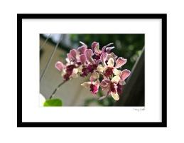Lovely Orchide