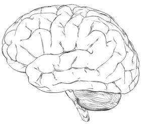 Träna din hjärna, 2 minuter per dag genom ledande system i rehabilitering