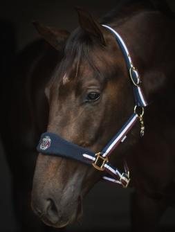 Grimma Badge - Ponny