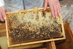 Köp gårdens egen nyslungade honung.