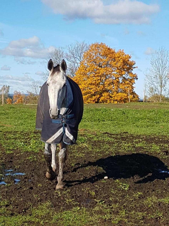 Vårat favourit märke på täcken är Horseware Amigo :-)