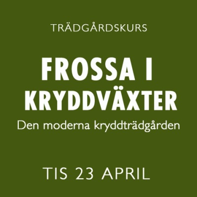 FROSSA I KRYDDVÄXTER / 23 APRIL -