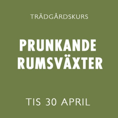 PRUNKANDE RUMSVÄXTER 30 APRIL -
