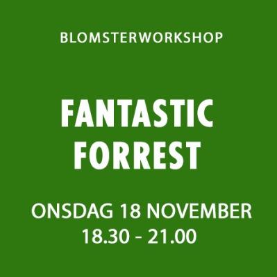 FANTASTIC FORREST / 18 NOVEMBER -