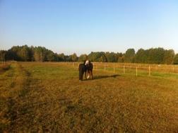 Pocca och Ester gör morgonbestyren