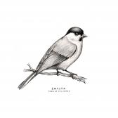 entita_bird_rahm