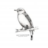 flugsnappare_bird_rahm