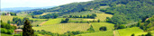 Vingård - Toscana